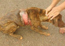 Caso de cães envenenados e queimados com soda caustica, revolta população de Matutina