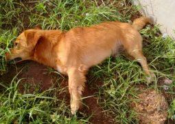 Dois cachorros morreram e outro passa mal após envenenamento em Rio Paranaíba