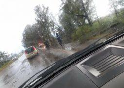 Eucalipto cai na BR-354 próximo ao distrito de Chaves e por sorte não causa nenhum acidente