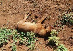 Após uma semana, caso de possível chacina de cães em Abaeté dos Venâncios, segue causando revolta em população