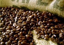 Chuvas favorecem lavouras de café no interior de Minas Gerais