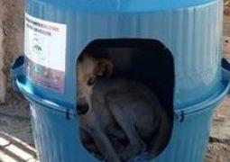 Cães de rua de São Gotardo, Guarda dos Ferreiros e Rio Paranaíba ganham casinhas para se protegerem. Ajude a cuidar!