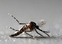 95 brasileiros morreram por dengue, zika ou chikungunya entre janeiro e julho de 2018