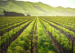 Verde: mais de uma década de investimentos rumo a uma agricultura mais sustentável e nutritiva