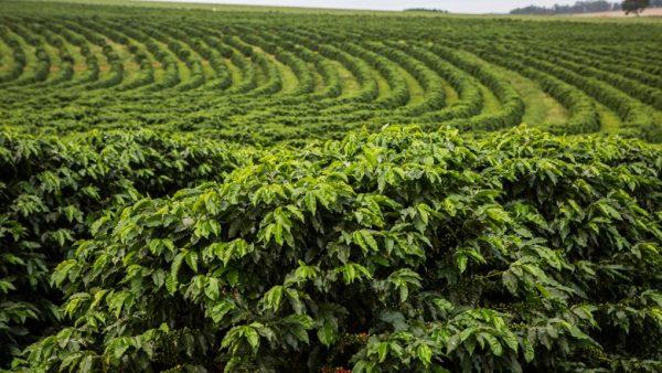 Foto Capa e Fotos Utilizadas: Divulgação/Verde AgriTech