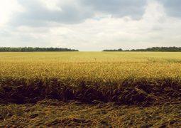 Salinidade do solo: uma ameaça aos microrganismos e à produtividade agrícola