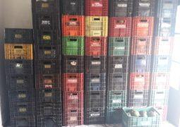 Após suspeita de furto de abacates, homem é preso com aproximadamente 55 caixas do fruto em Guarda dos Ferreiros