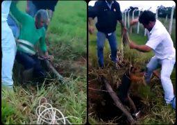 Resgate do Bem: Associação Vira-Latas de Raças e populares resgatam cão que caiu em cisterna em São Gotardo