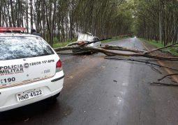 Motorista percebe eucalipto caindo, tenta evitar incidente, mas carro acaba sendo atingido em cheio em Carmo do Paranaíba