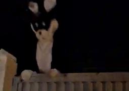 Portal SG AGORA descobre identidade de coelho que invadiu Parque de Exposições de São Gotardo