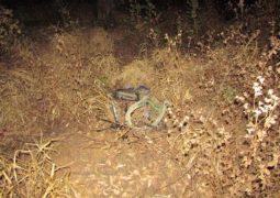 Ciclista morre atropelado na MG-235 entre as cidades de Ibiá e São Gotardo