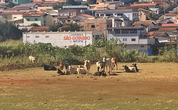 Foto Capa: Leonardo Machado/Ennio de Assis Moreira/Setor de Fiscalização Municipal de São Gotardo