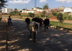 Novos animais são apreendidos em perímetro urbano de São Gotardo