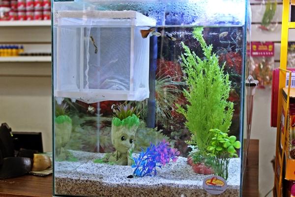Na AgroPet você encontra todos os tipos de aquários para peixes e tartarugas (Foto: SG AGORA)