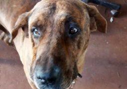 Não é frescura: Cachorro infarta e morre durante queima de fogos de artifício em São Gotardo