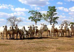 Associação é criada para resgatar essência da pista para a genética do gado Nelore brasileiro