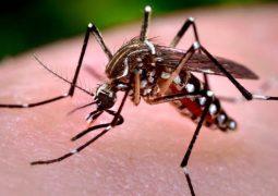 São Gotardo registra primeiros casos de Dengue no ano de 2020
