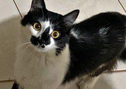Gatinha desaparece em São Gotardo e família oferece recompensa para quem encontrá-la!