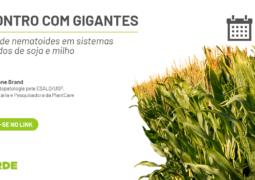 Aprenda como controlar nematoides em sistemas integrados de soja e milho