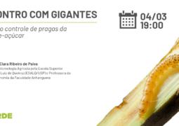 ENCONTRO COM GIGANTES: Entenda como o silício atua no controle de pragas da cana-de-açúcar