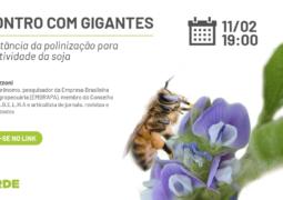 Como as abelhas podem ajudar a aumentar a produtividade da soja?