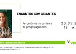 ENCONTRO COM GIGANTES: Descubra como aumentar a produtividade utilizando feromônios de insetos