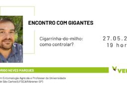 ENCONTRO COM GIGANTES: Aprenda estratégias para controlar a cigarrinha-do-milho