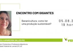 Aprenda a fazer um manejo sustentável na cultura da banana