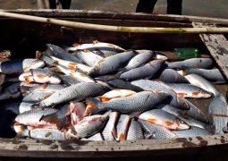 PM Ambiental de São Gotardo localiza e multa autores de pesca ilegal realizada no Rio Paracatu