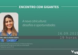 Descubra como aproveitar as oportunidades da citricultura brasileira