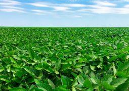 Chuvas em baixa e fertilizantes em alta: qual a saída para o agricultor?