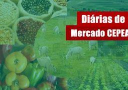 BATATA/CEPEA: Sul de MG lidera alta dos custos